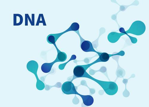 DNA的粗提取与鉴定 生物教师